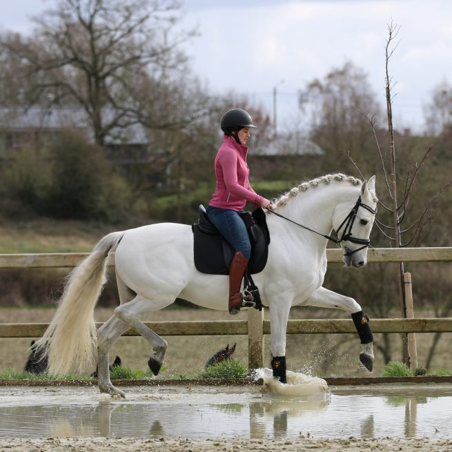 EDIX Yasir soft tree dressage saddle